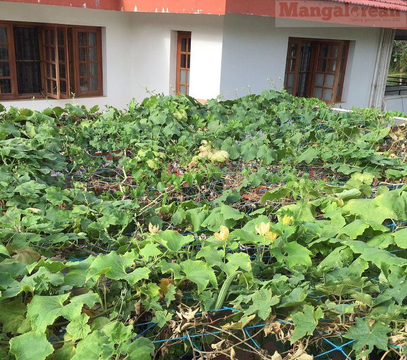 Dr-KS-Bhats-terrace-farm-solar-panel (1)