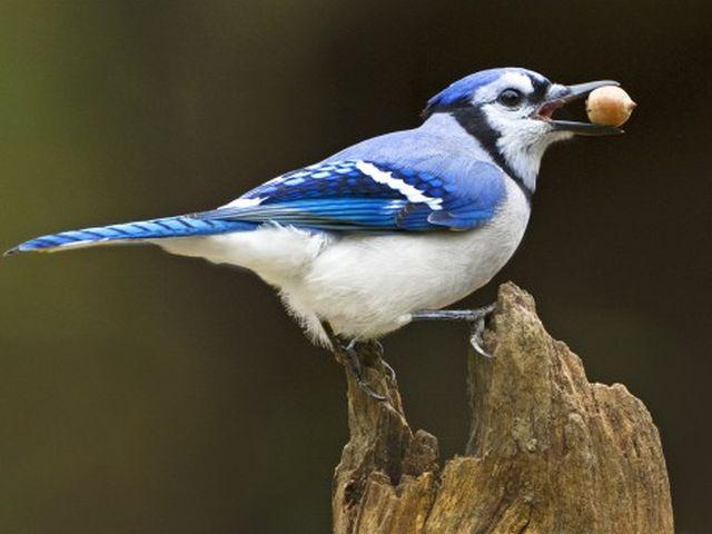 birds-20160617