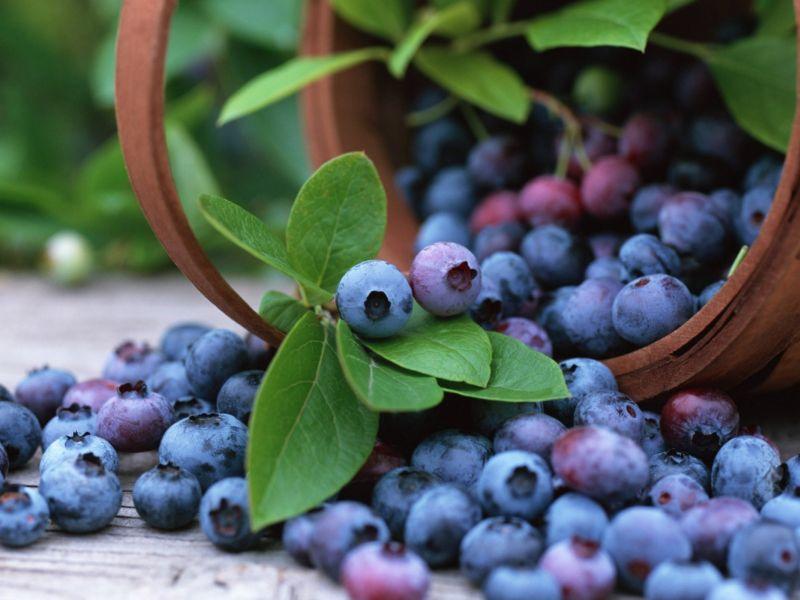 blueberries-20160620