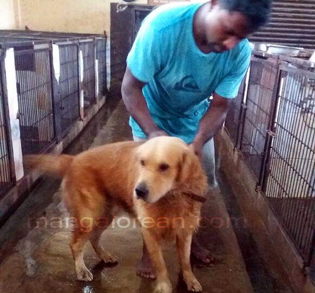 canine-found-balmatta-looking-owner1-20160629