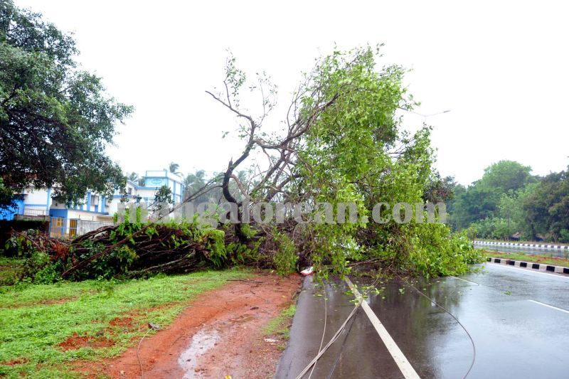 image006kaup-accident-tree-fall-20160606