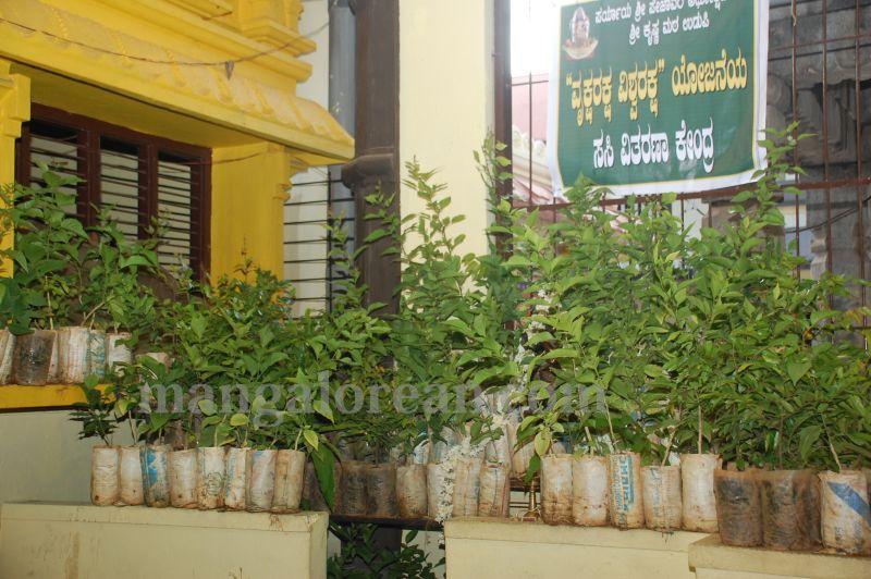 image006laksh-vraksha-counter-krishna-temple-20160614