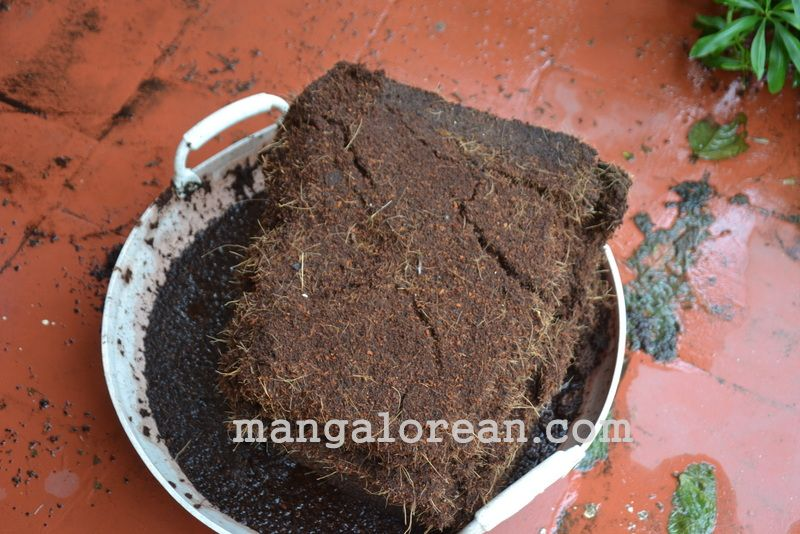 image008gardener-dr-ks-bhat-grows-plants-using-no-soil-20160623-008