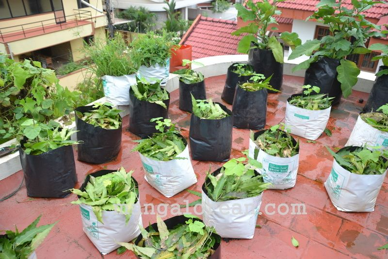 image010gardener-dr-ks-bhat-grows-plants-using-no-soil-20160623-010