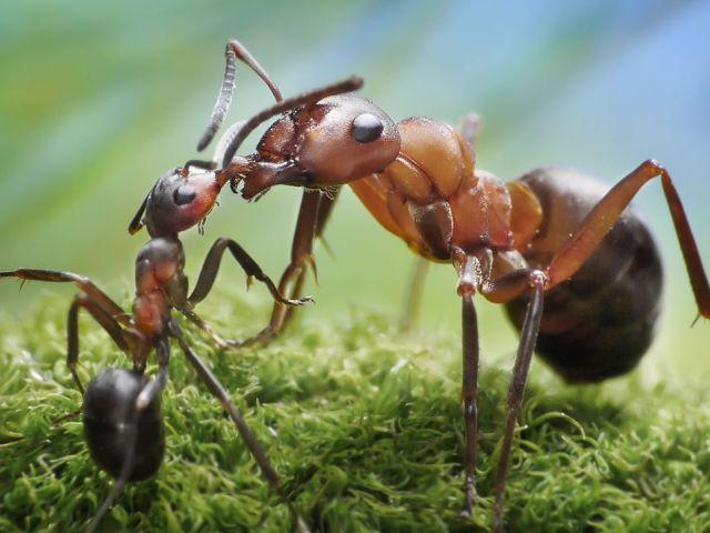 ants-20160720