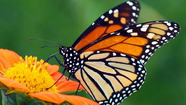 butterfly-20160729