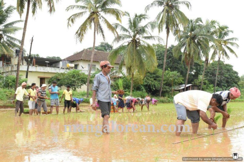 image001vijayadka-church-paddy-cultivation