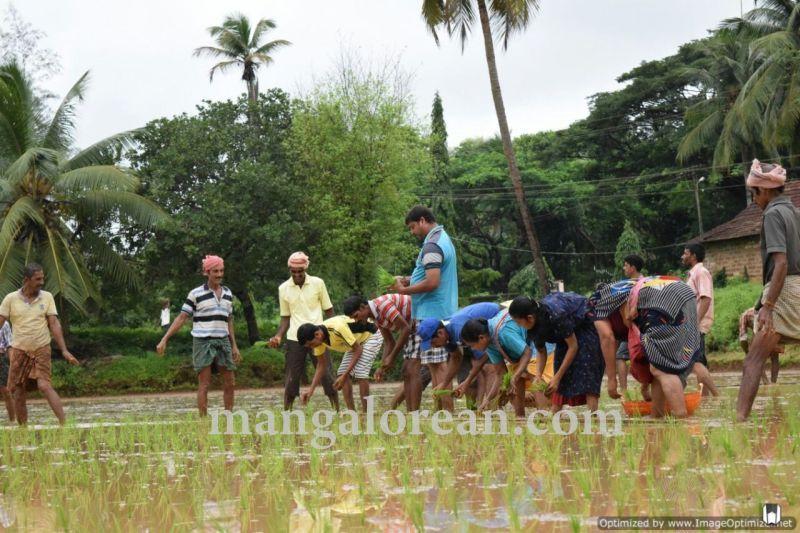 image003vijayadka-church-paddy-cultivation