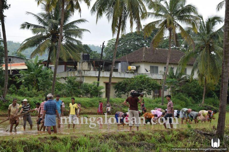 image005vijayadka-church-paddy-cultivation