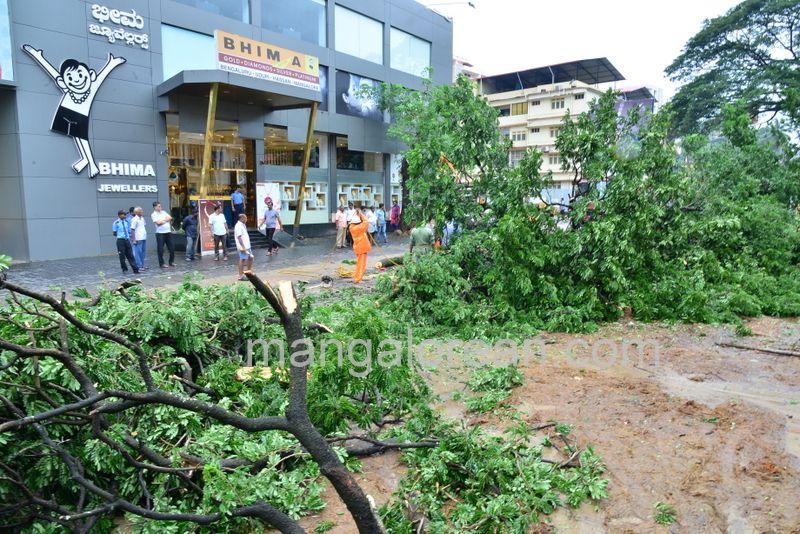 image008tree-uproots-balmatta-20160724-008