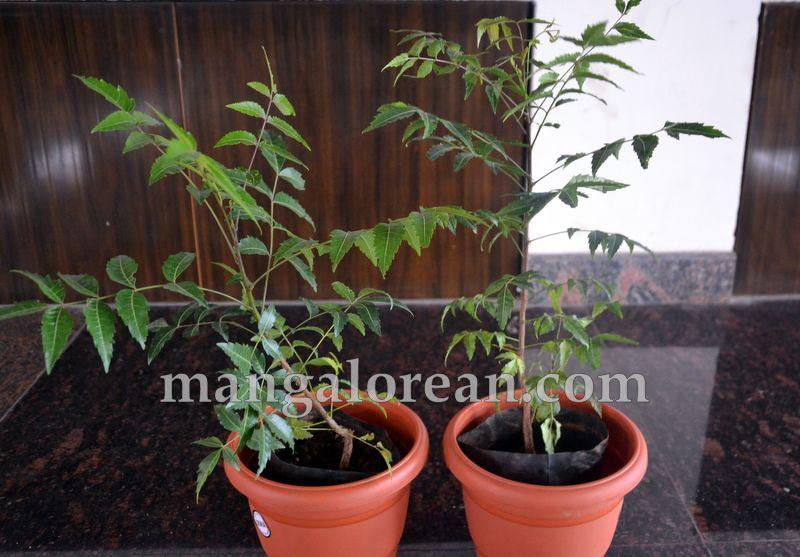image018mccs-neem-sapling-20160727-018