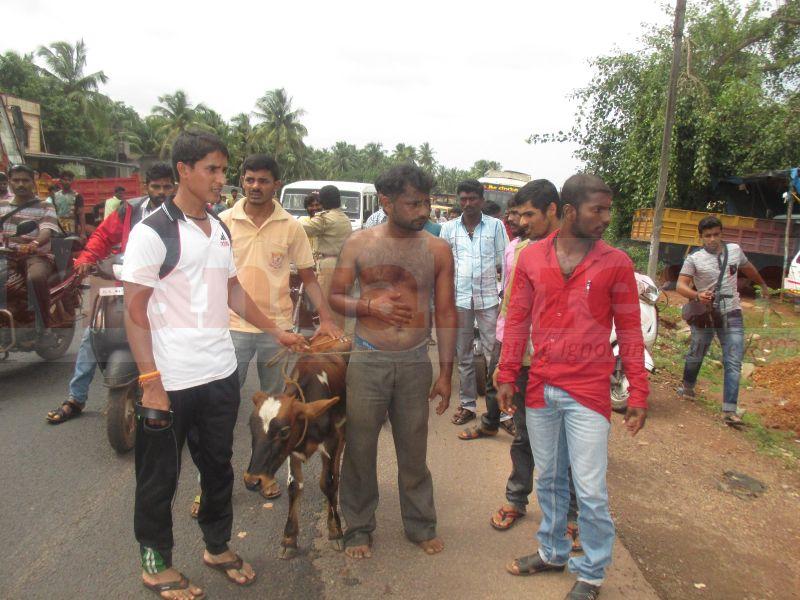 cattle-teft-bhatkal-20160803-02