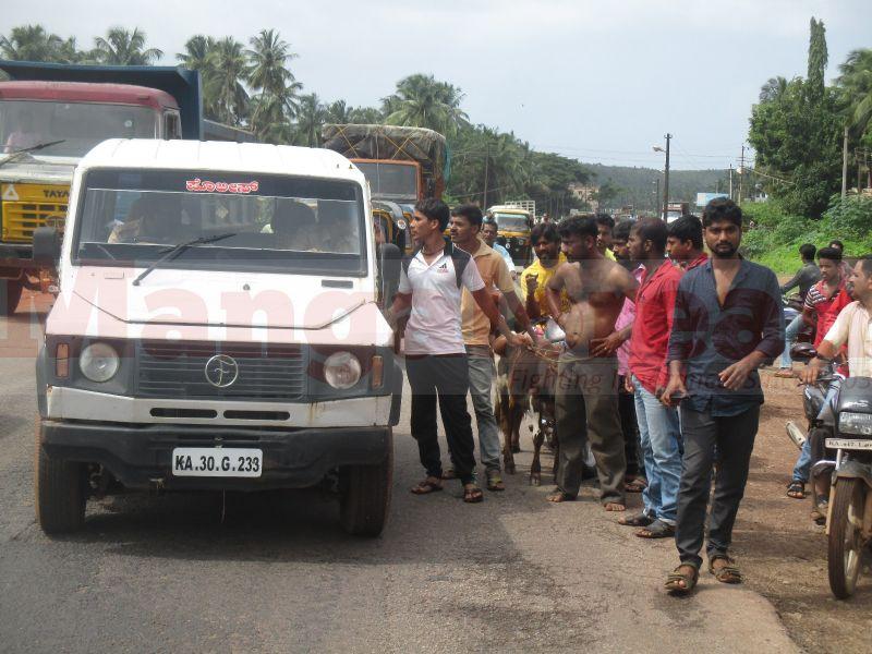 cattle-teft-bhatkal-20160803-03