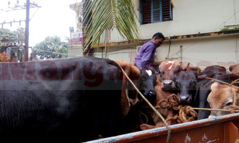 cattle-theft-arrest-udupi20160804-01