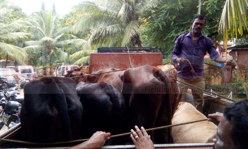 cattle-theft-arrest-udupi20160804-03