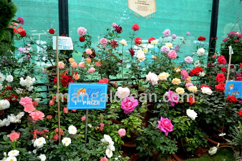 image013flowers-galore-bluru-20160810-013