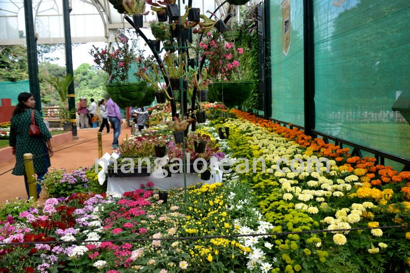 image014flowers-galore-bluru-20160810-014