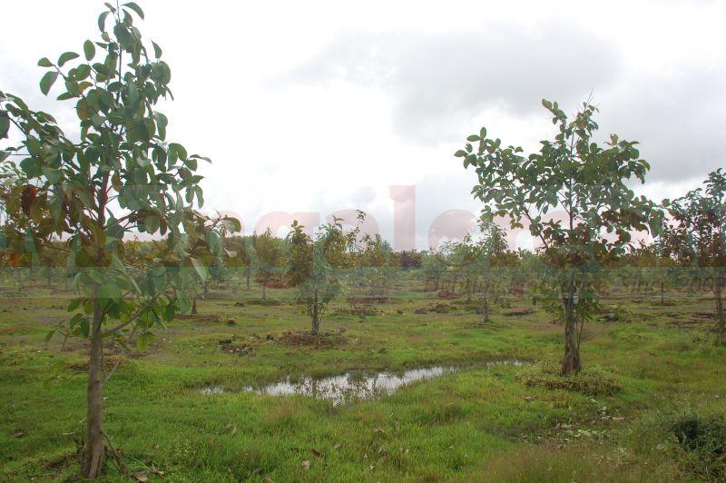 ramanath-rai-tree-park-udupi-20160822-03