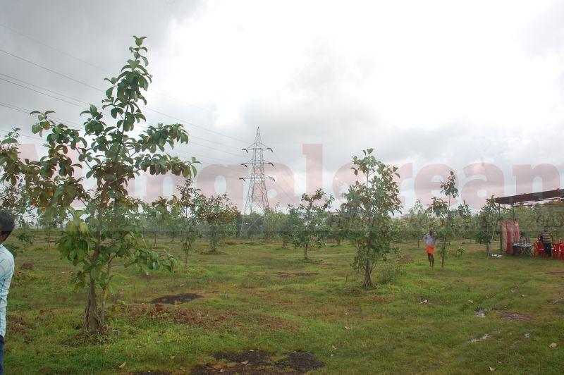 ramanath-rai-tree-park-udupi-20160822-04