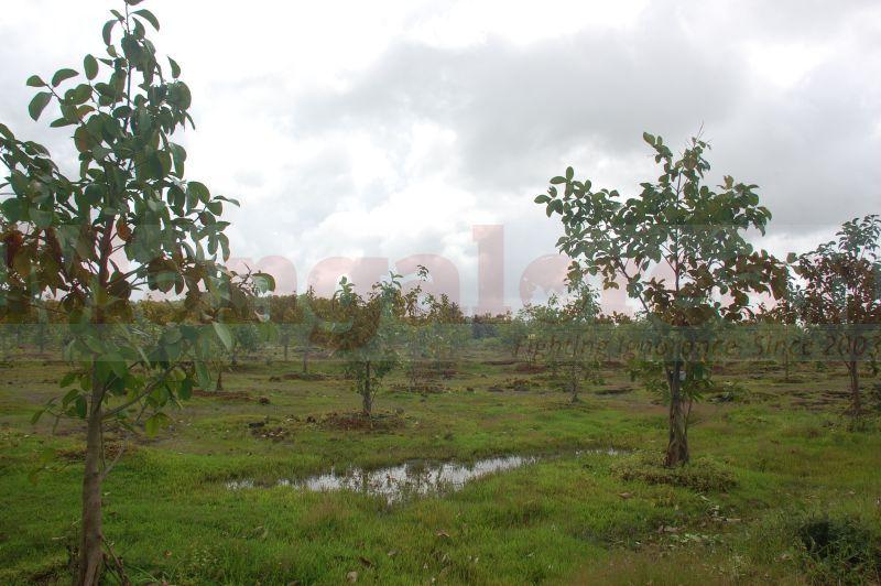 ramanath-rai-tree-park-udupi-20160822-05