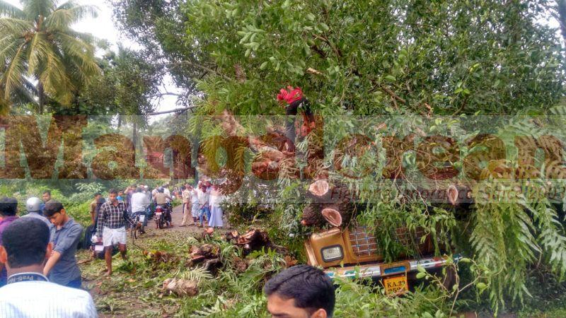 tree-falls-on-bus-20160928-00