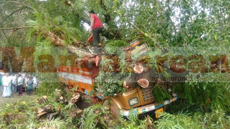 tree-falls-on-bus-20160928-01