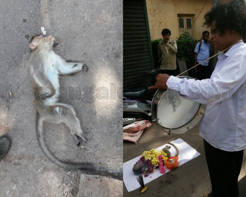 dead-monkey-funaral-01