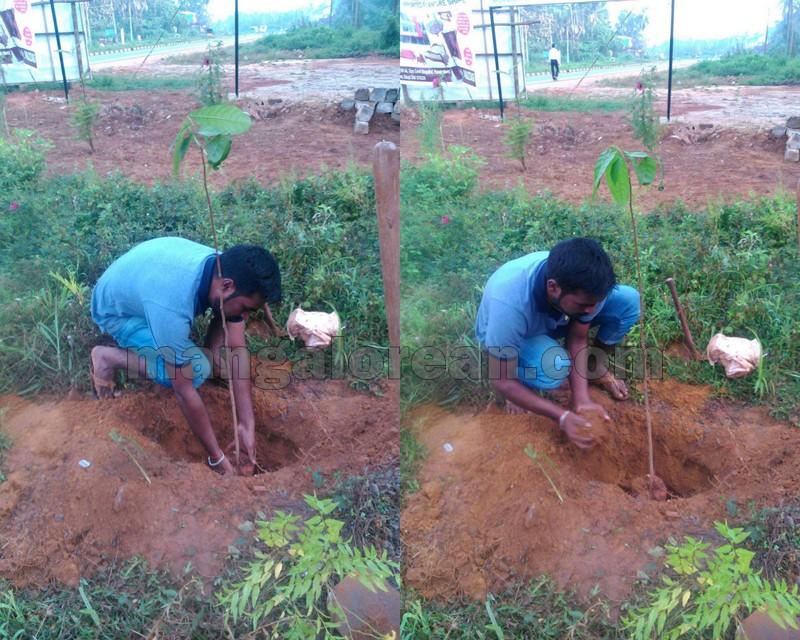 sapling-planting9