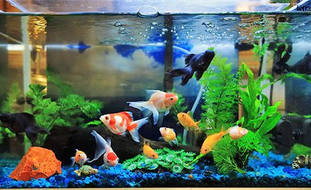India 39 s first ornamental fish tech park to come up in for Ornamental fish tank